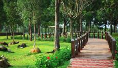 Căn Hộ Celadon City môi trường xanh giữa Thành Phố ồn ào, khói bụi.