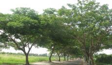 Cần chuyển nhượng lô đất A4, thuộc dự án Phú Xuân Vạn Phát Hưng, giá 21.5 tr/m2