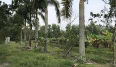 Bán Nhà Vườn  tại Đường 423, Củ Chi, Hồ Chí Minh diện tích 7462m2  giá 11.193 Tỷ