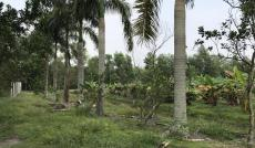 Bán trang trại, khu nghỉ dưỡng tại Đường 423, Củ Chi, Hồ Chí Minh diện tích 7462m2  giá 11.193 Tỷ