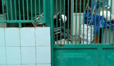 Nhà 1 trệt, 1 lầu, hẻm đường 311, Lê Văn Việt, phường Hiệp Phú, Q9, DT 64.5m2, SHR