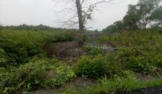 Bán đất MẶT TIỀN 11000m2 xã An Thới Đông, huyện Cần Giờ  GÍA 1.8 triệu/m2
