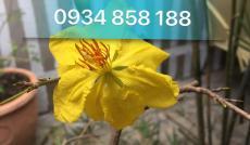 Cần bán nhà HXH 231/ Dương Bá Trạc, P1, Q8 4,5x15,5 .giá 6,15 tỷ