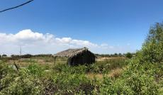 Bán đất Lý Nhơn, X. Lý Nhơn, Cần Giờ: 1124m2 (300m2 thổ), giá: 1,8  tỷ